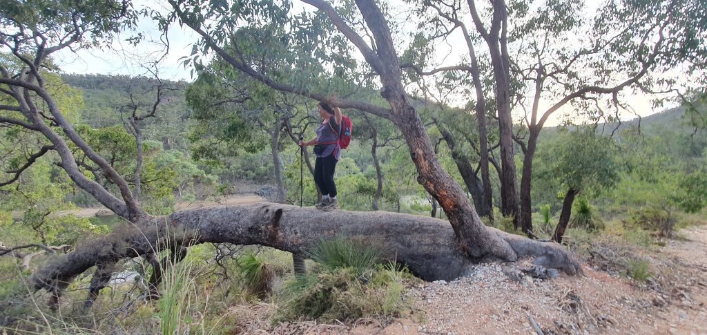 Helena-tree-otbt