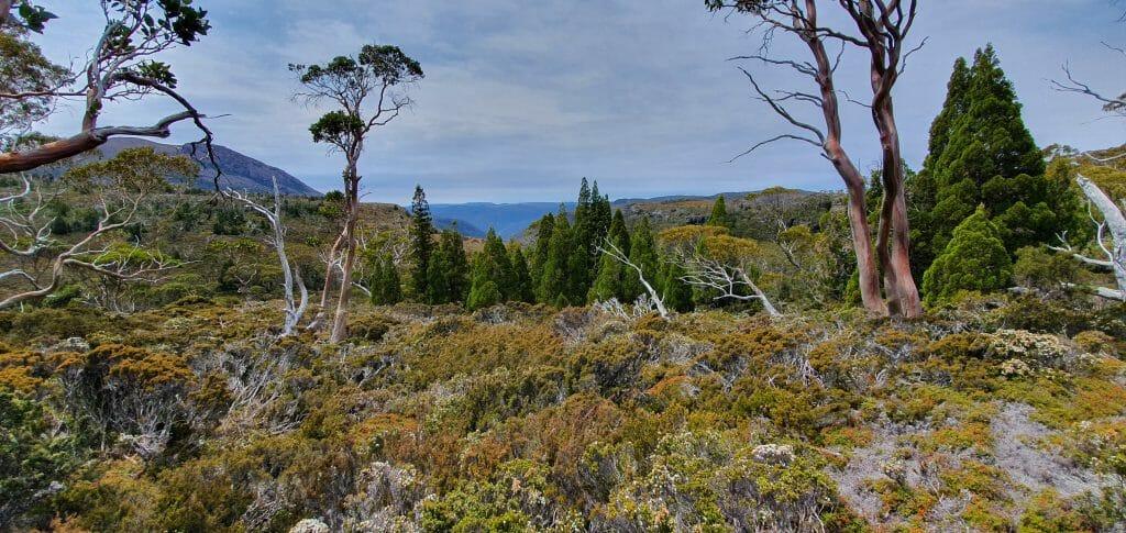 Overland Landscape