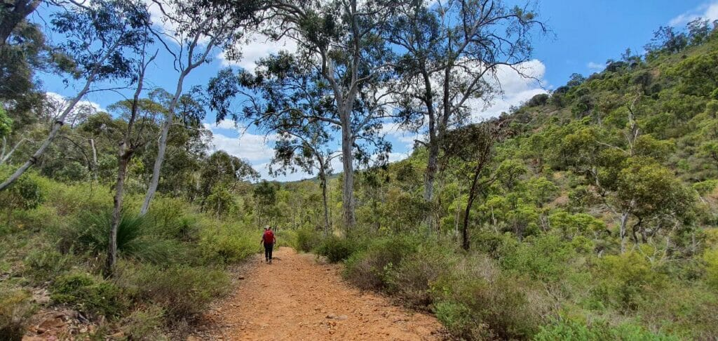 Baldwins Bluff Sunrise Hiking Experience5