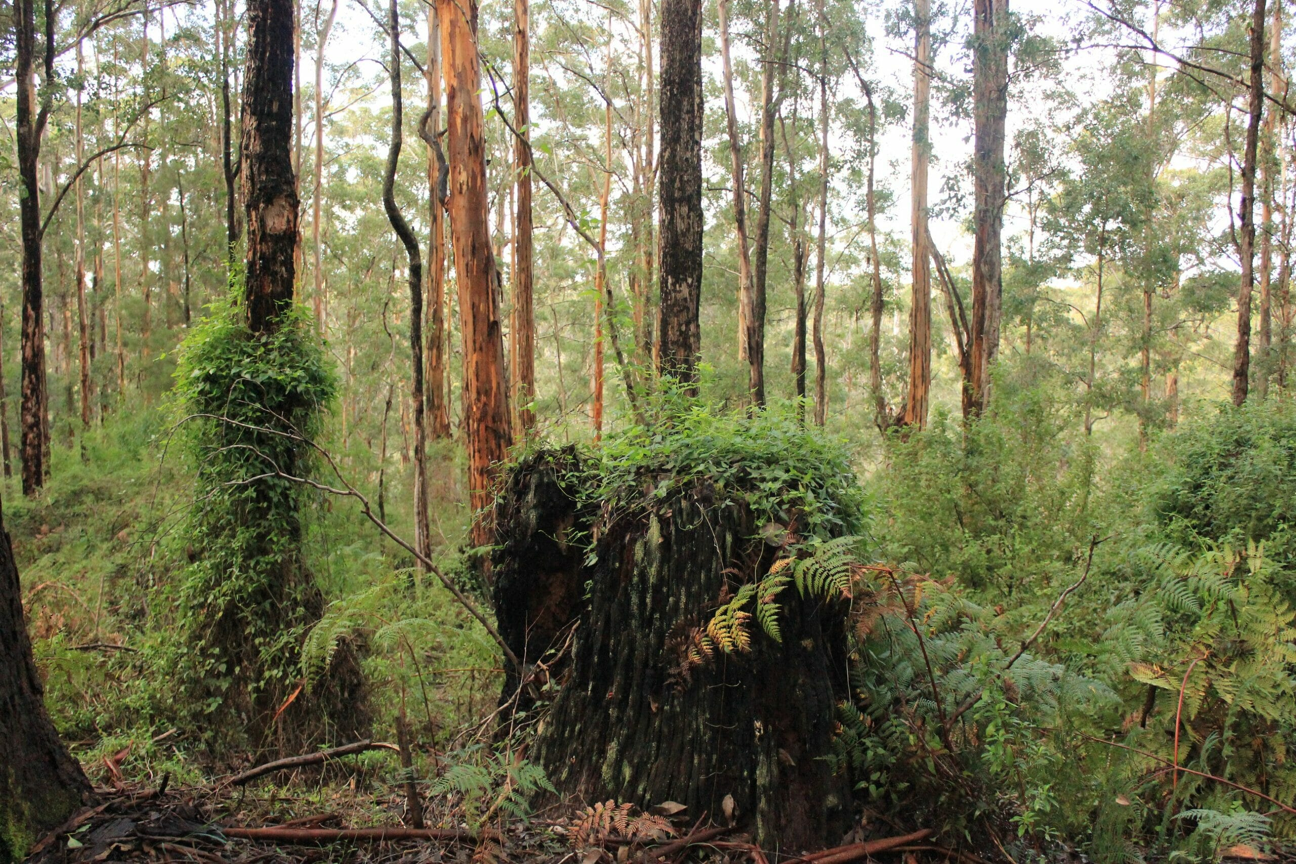 Southern Forests Weekender Experience