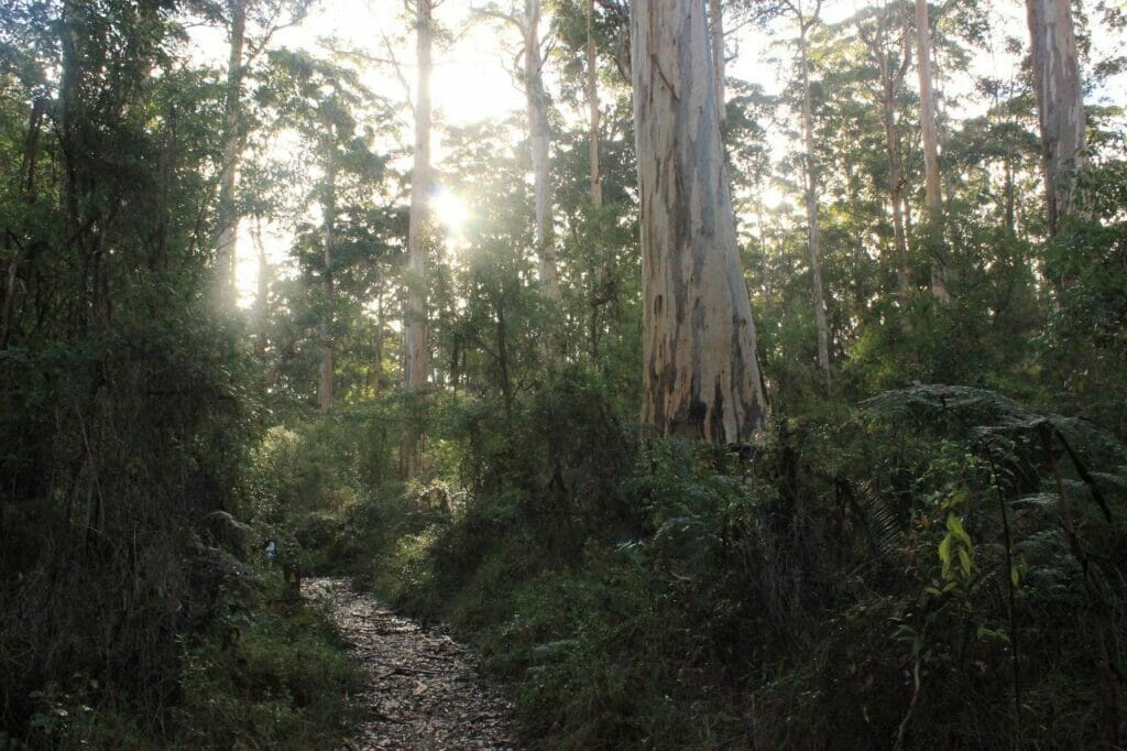 Southern Forests Weekender Experience6