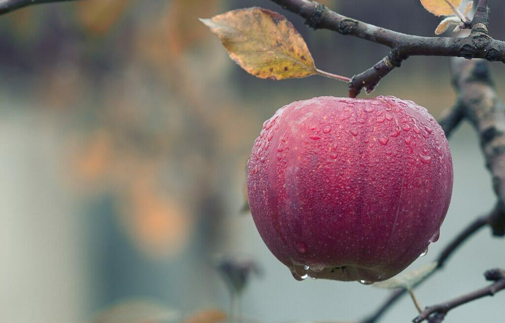 apple 1122537 1920