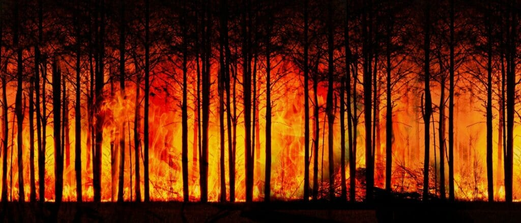 forest fire 3836834 1920